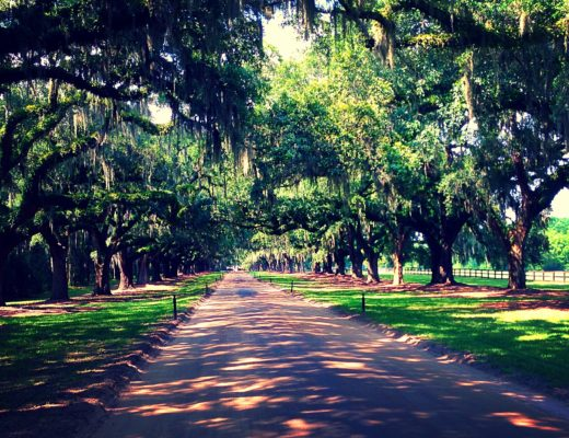 Charleston Boone Hall Plantation